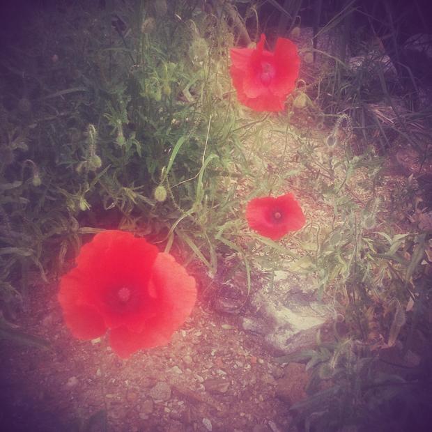 Czerwień lata i manipurowych sukienek