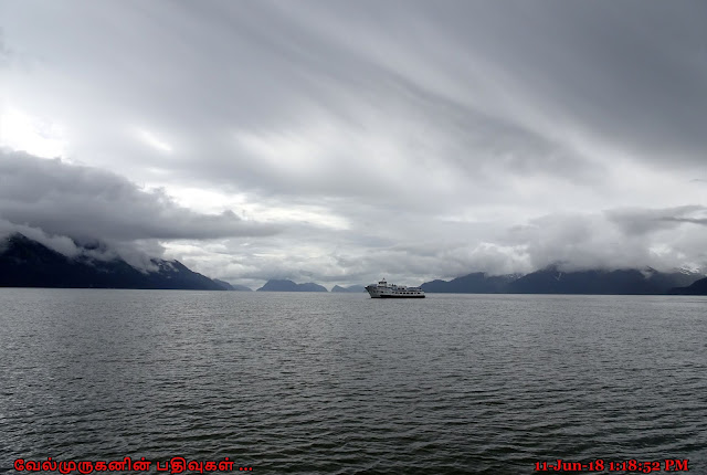 Kenai Fjords Wildlife Cruise Seward