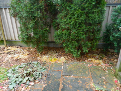 Oakwood Vaughan Toronto Backyard Fall Cleanup Before by Paul Jung Gardening Services--a Toronto Gardening Services Company