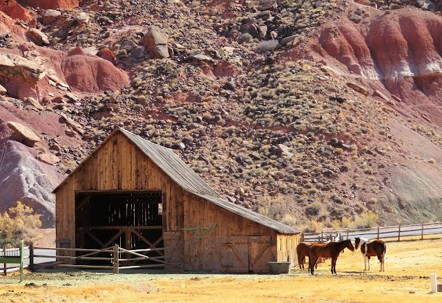 A barn and horses.