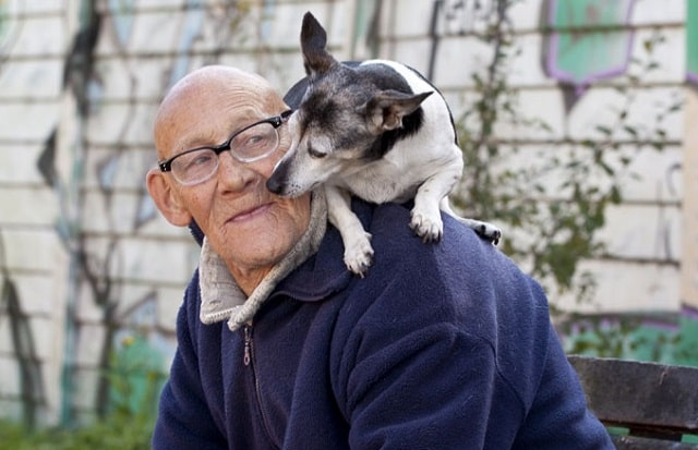 pet therapy how animals improve mental health pets fight loneliness