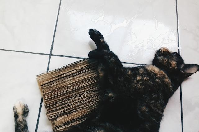 Gato deitado no arranhador