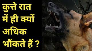 कुत्ते रात में ही क्यों अधिक भौंकते हैं ?