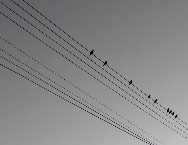 little birds on a phone line