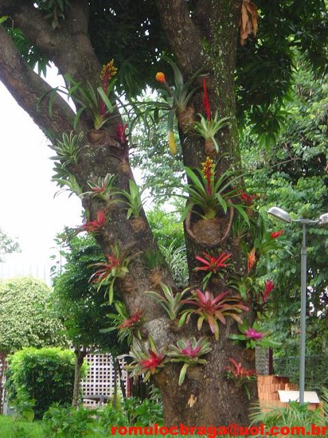 จัดสวนสับปะรดสี