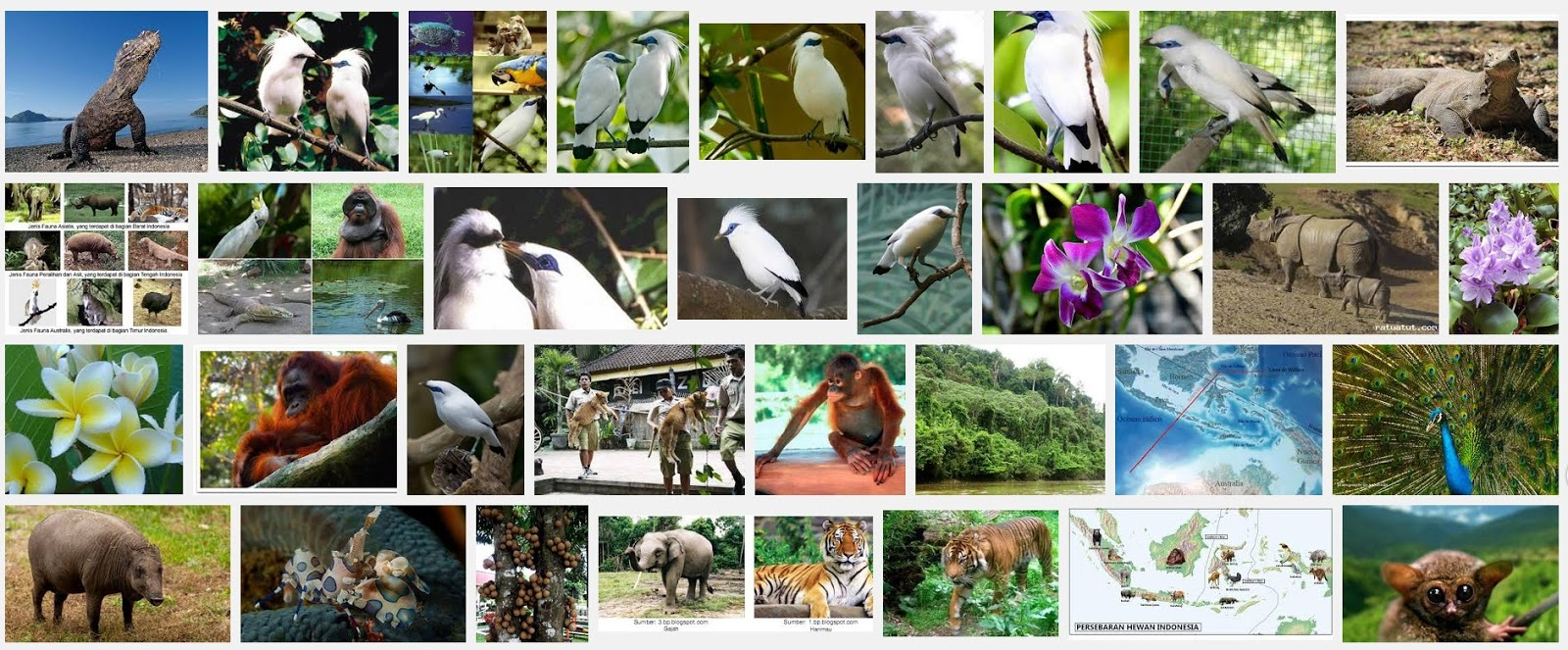 CAKRA GUIDE BALI- LOMBOK - Introduction to bali FAUNA