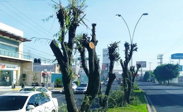 Ecología, tala, ambiente