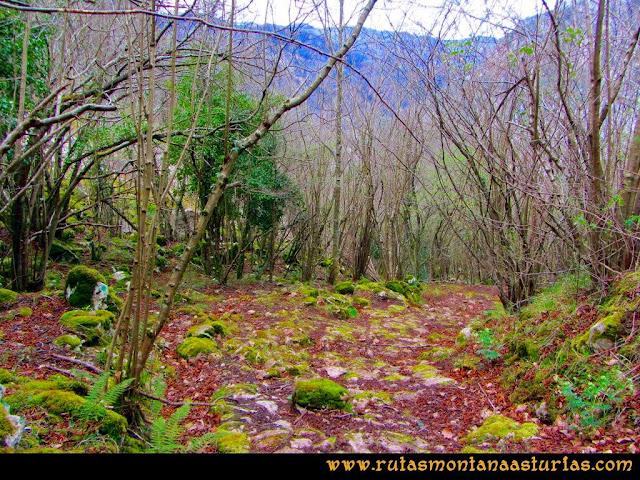 Ruta al Pico Gorrión: Bajada por la canal, atravesando una zona boscosa