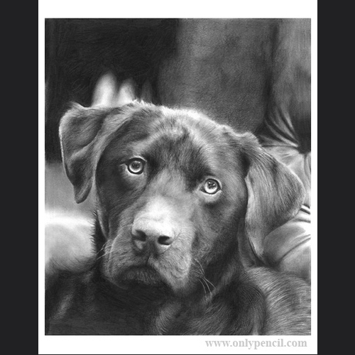15-Luther-Brown-Lab-Lisandro-Peña-Animal-Drawings-with-Attention-to-Minute-Details-www-designstack-co