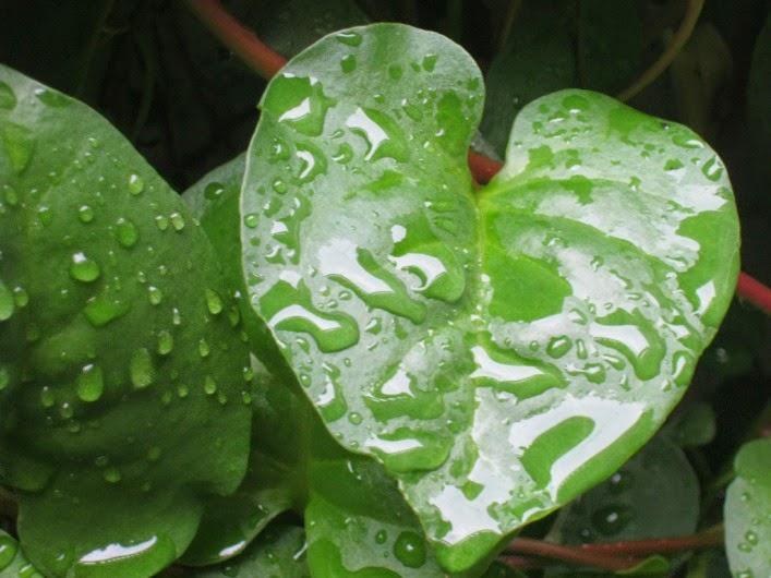 7 Manfaat Jamu Hermuno Intoxic (Obat Parasit)