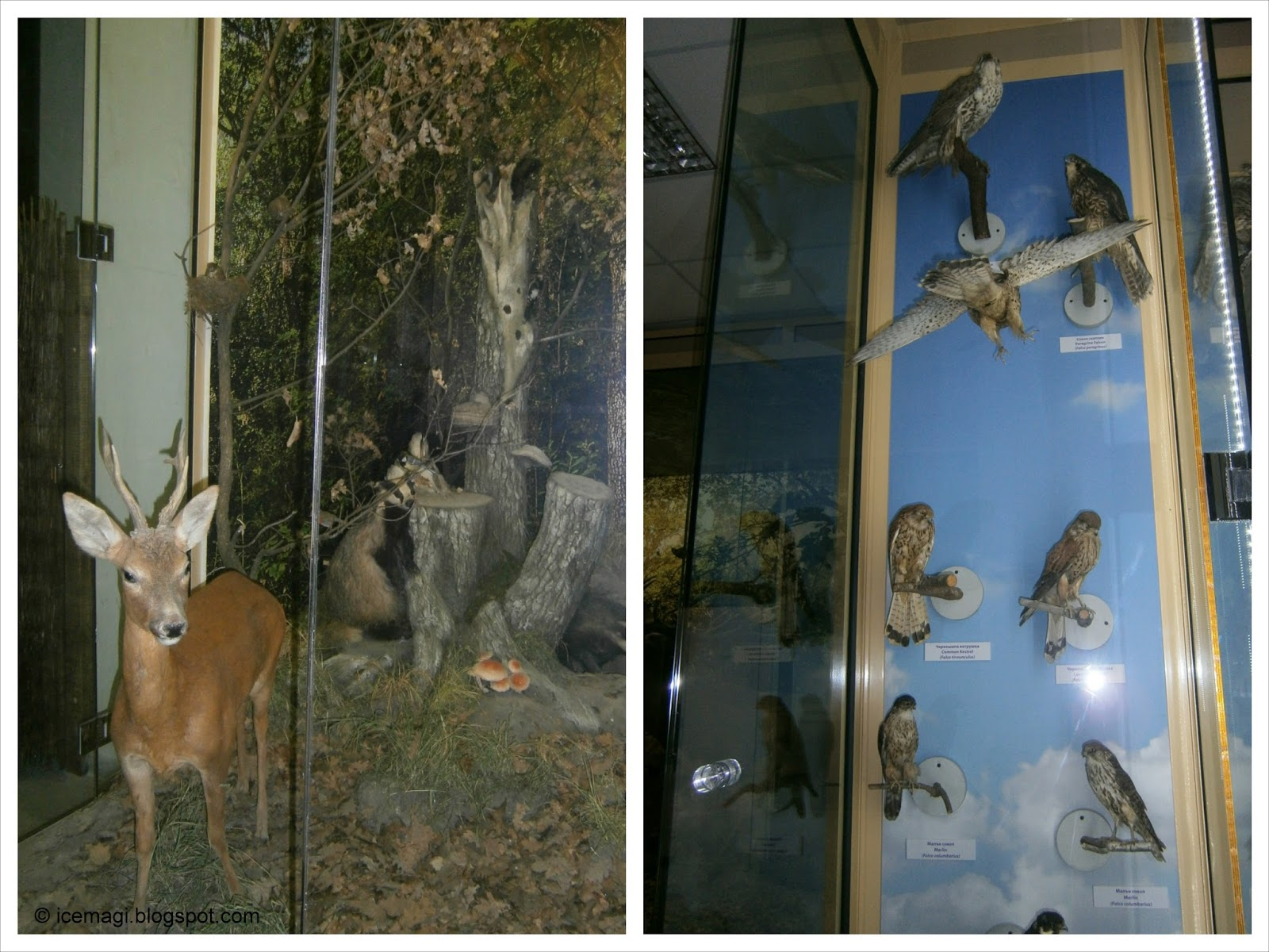 The Eco museum - Ruse, Bulgaria