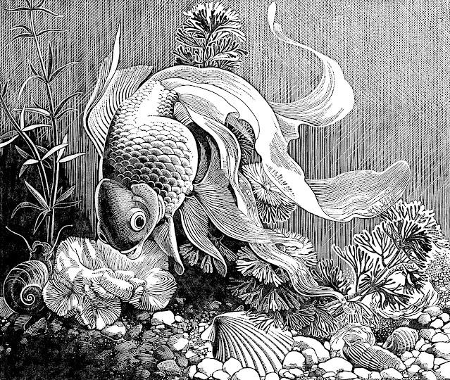 a Dorothy Lathrop 1940s illustration of a goldfish