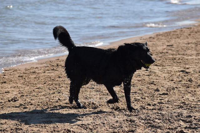 Montrose Dog Beach, Chicago, dogs, taylor
