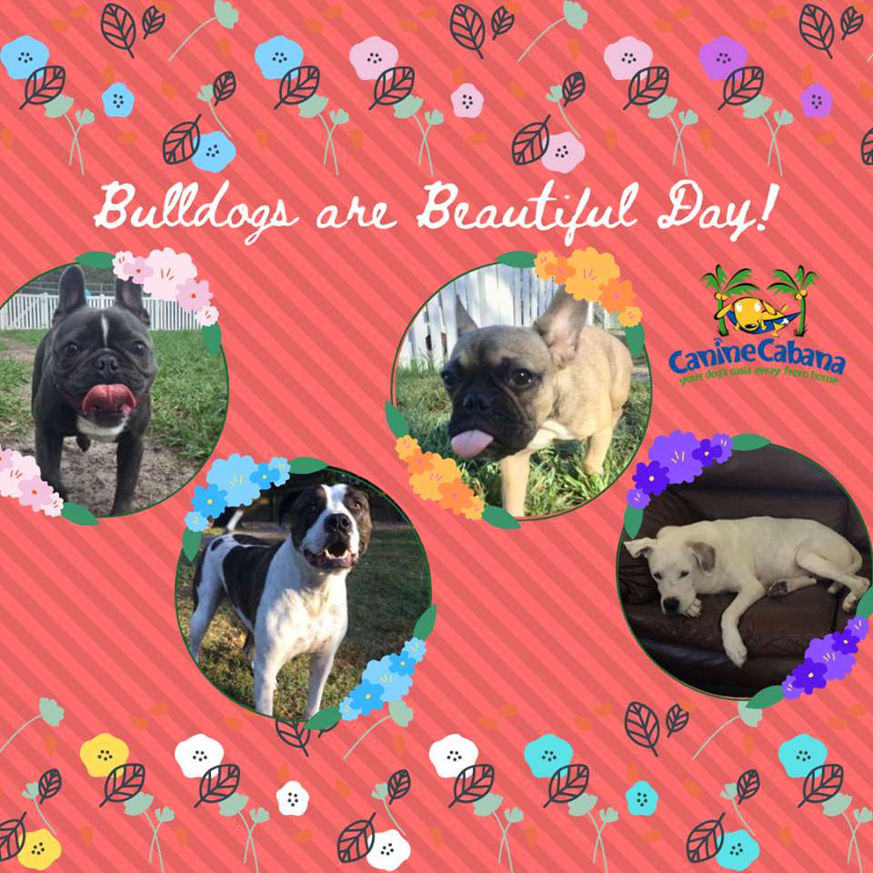 National Bulldogs Are Beautiful Day Wishes pics free download