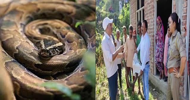 हिमाचल: घर में घुसा 'रॉक पाइथन', शिक्षक माथुर धीमान ने पाया अजगर पर काबू- दिया नवजीवन