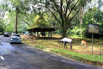 taman safari indonesia, tempat wisata yang wajib kamu kunjungi