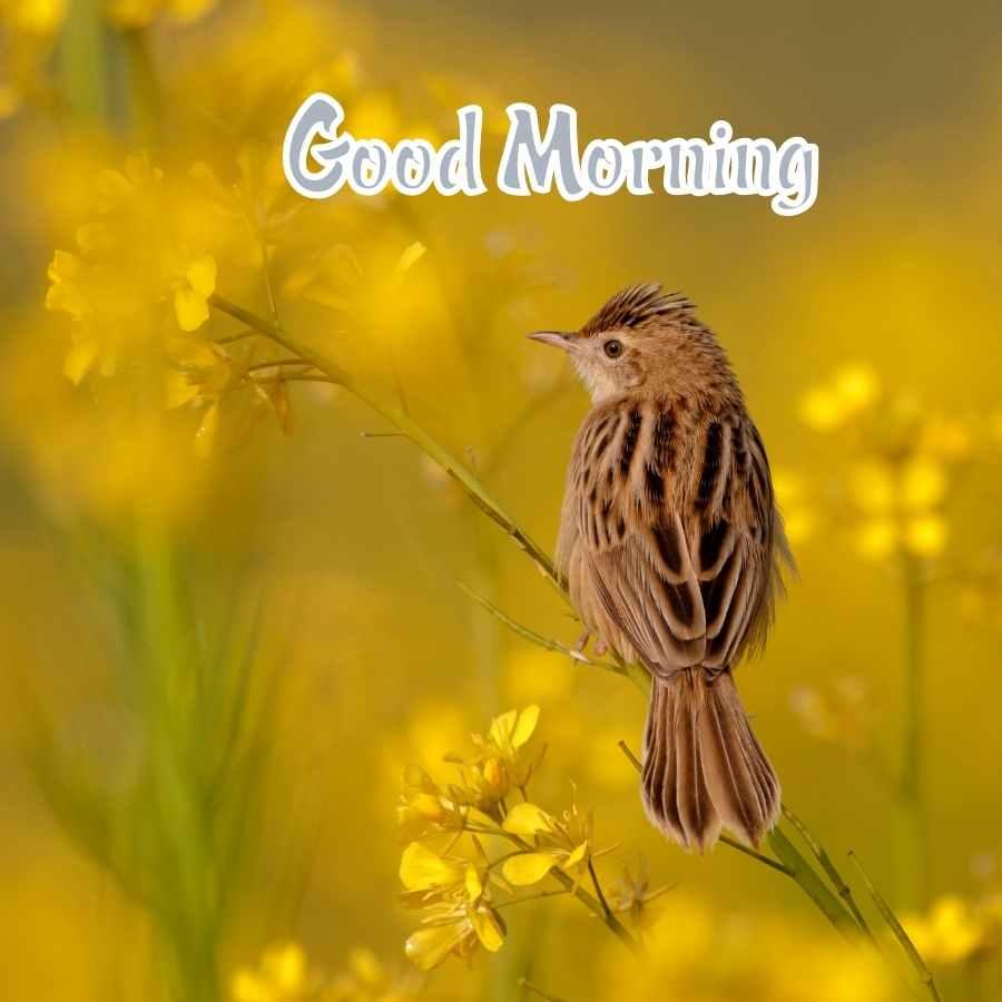 gud morning images for husband
