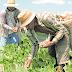 Safra de grãos 2019 deve ser 37,8% maior que a de 2018 no Ceará