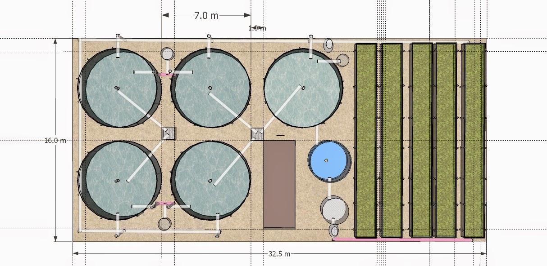 Acuicultura bioentorno s c for Cria de tilapia en estanques plasticos