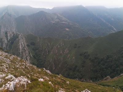 pico-cogollu