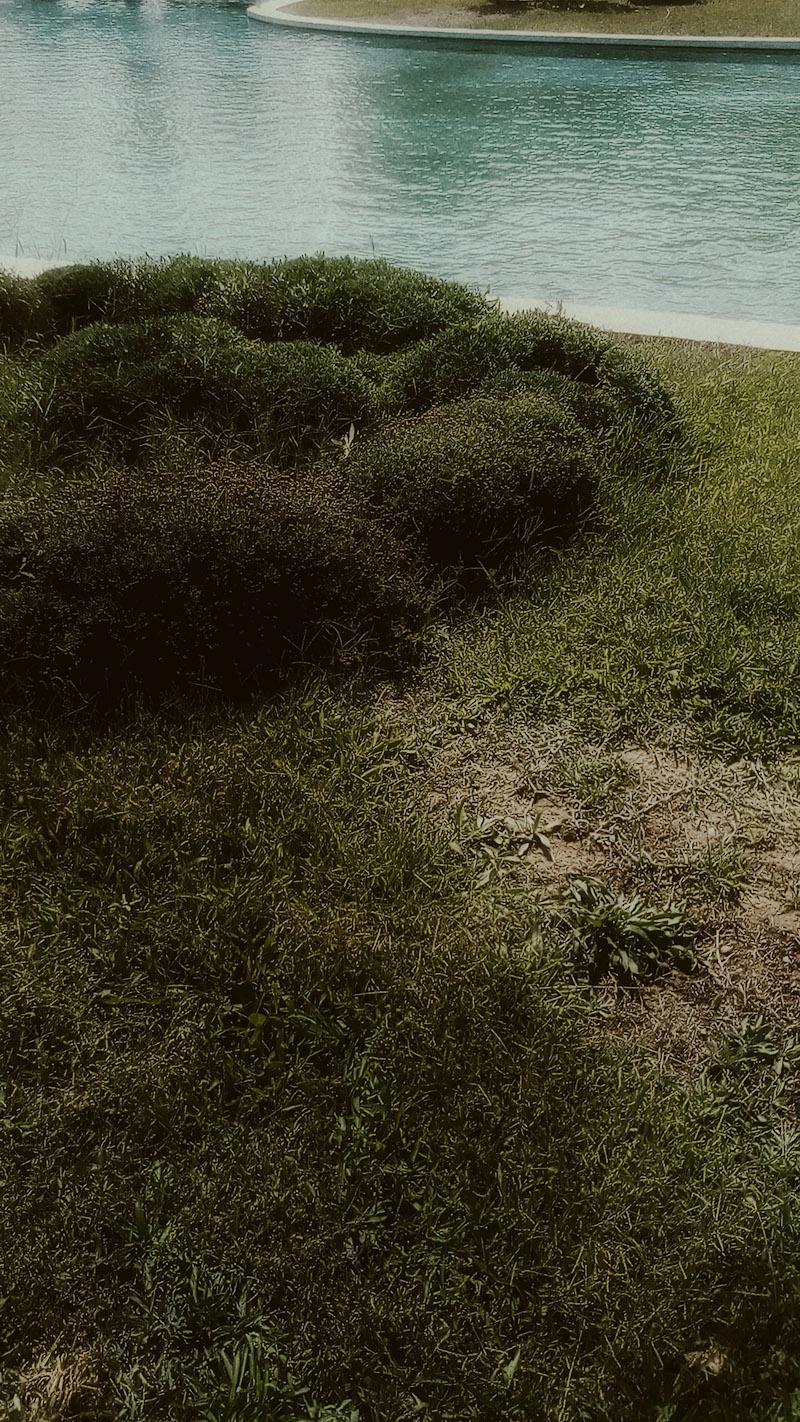 A photograph of dark green bushes near an artifical lake by Kostas Gogas.