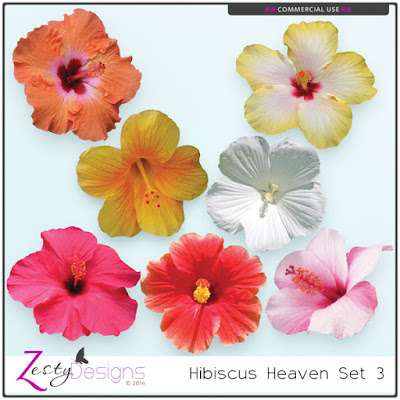 https://www.digitalscrapbookingstudio.com/commercial-use/elements/cu-hibiscus-heaven-set-3/