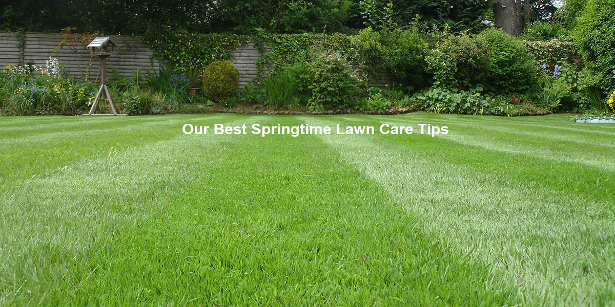 Our Best Springtime Lawn Care Tips