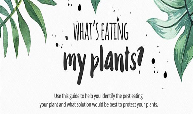 Garden Guide: What's Eating My Plants?