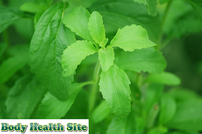 Stevia, sugar substitute low calorie