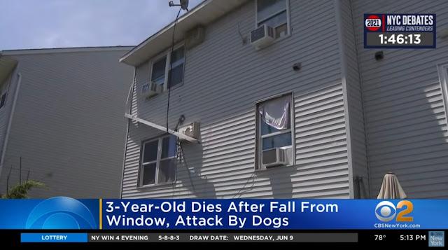 ΗΠΑ: Τρίχρονο παιδάκι ξεψύχησε όταν έπεσε από το παράθυρο και του επιτέθηκαν σκυλιά (βίντεο)
