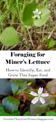 https://proverbsthirtyonewoman.blogspot.com/2017/04/foraging-for-miners-lettuce.html