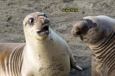 meme, humor, engraçado, melhor site de memes, memes 2019, memes brasil, memes br, eu na vida, zueira sem limites, humor negro, melhor site de humor, foca, zueira