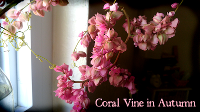 Coral Love Vine, Queen's Wreath, Flowers