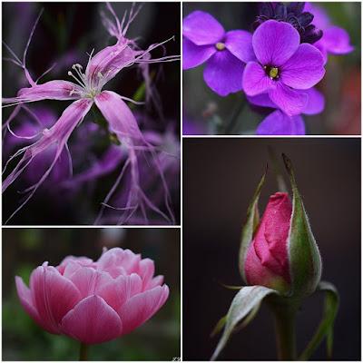 Blumen-Tulpen-Nelken und Rosen in Nahaufnahme-Macrobilder