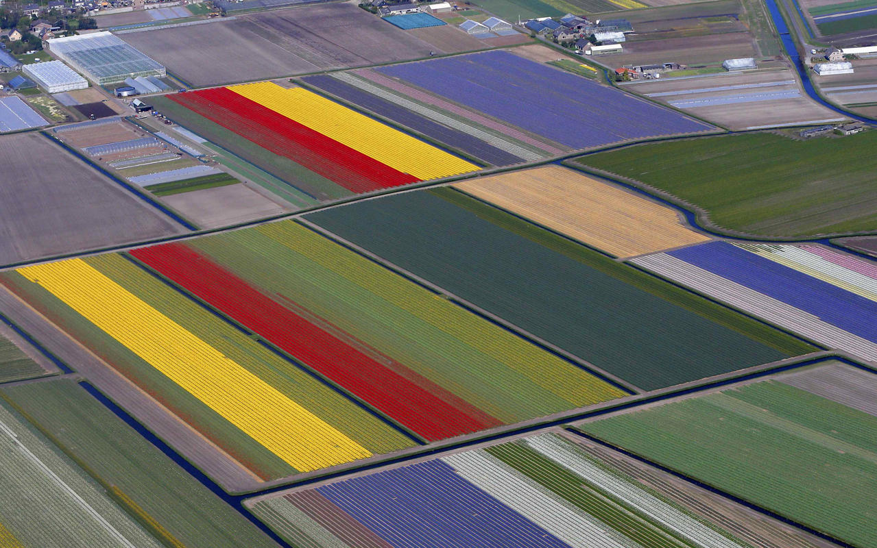 Разноцветные поля цветов парка Кекенхоф в Голландии