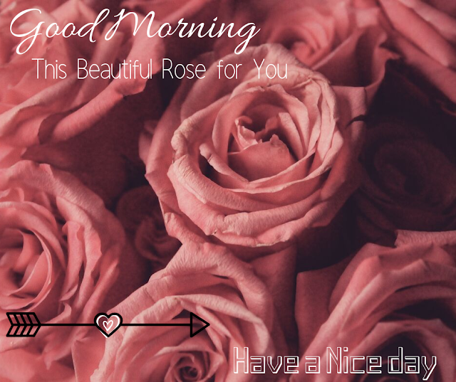many nice Good Morning  Images with Rose
