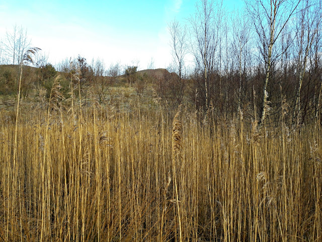 Lyme and Wood Pits Country Park