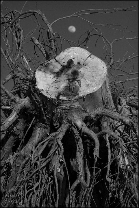 fotografia,naturaleza,luna,Límites,arte,raices