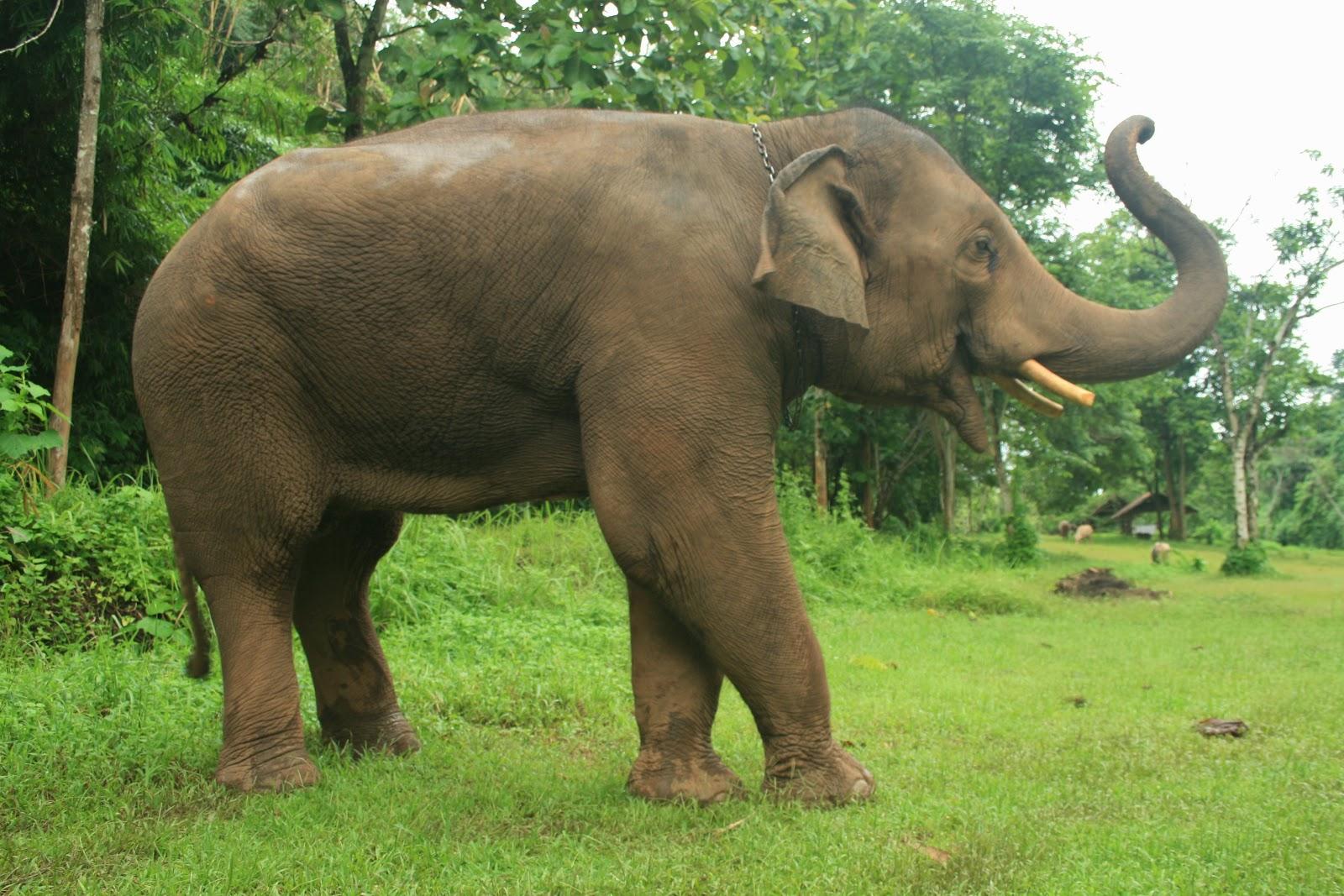 Elephants Facts