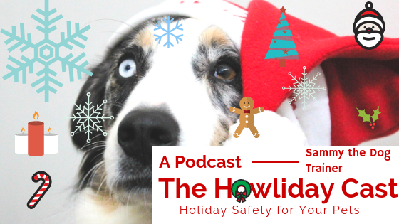 pet holiday safety