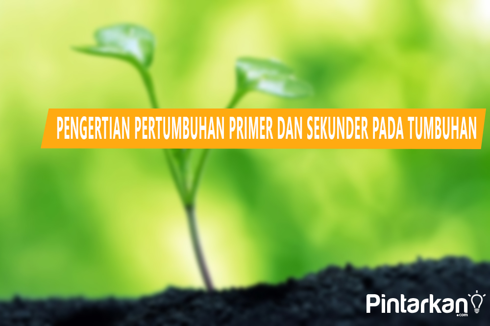 Pengertian Pertumbuhan Primer dan Sekunder pada Tumbuhan