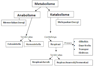 Tabel Metabolisme
