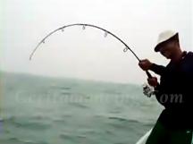 Double Strike Mancing Ikan Kerapu Besar Mantap
