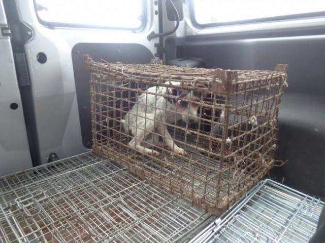 Волонтеры из Польши спасли собаку, которая практически разучилась ходить