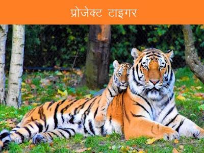 भारत में प्रोजेक्ट टाइगर प्रारम्भ किया गया था