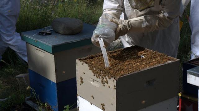 Κρήτη: Δηλητηρίασαν χιλιάδες μέλισσες στην Βιάννο!