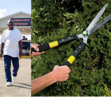 Man sentenced to life imprisonment for stealing set of hedge trimmers is freed after spending 23 years in prison