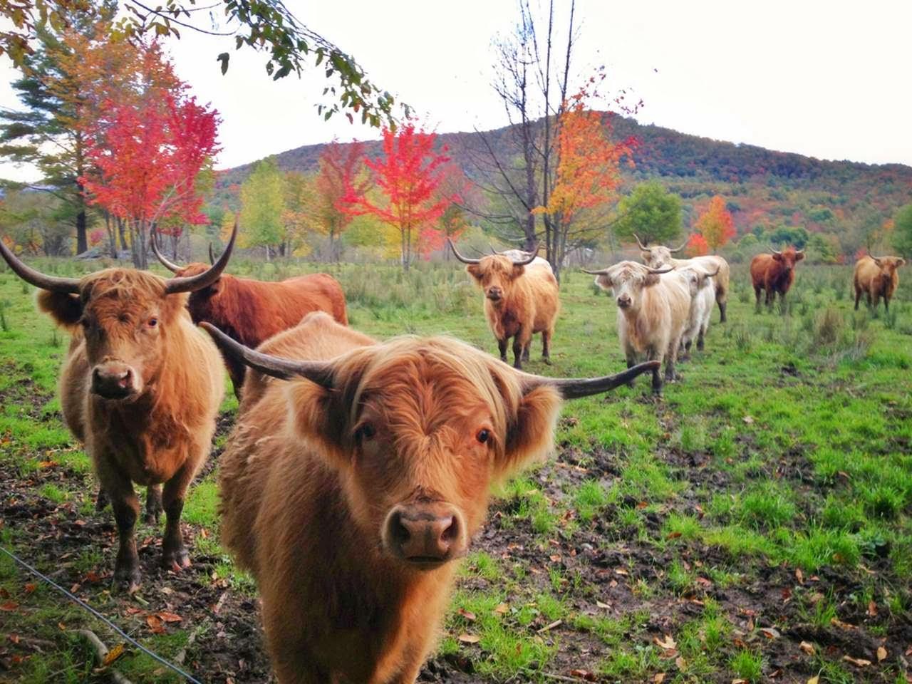 Funny animals of the week - 1 November 2013 (30 pics ...