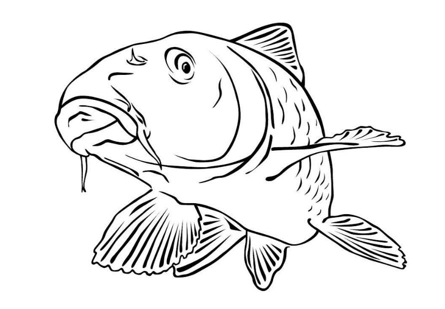 40 malvorlage fisch a4  farbung