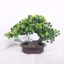 buy bonsai tree online india